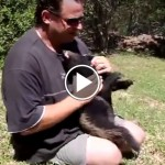 Honey Badger as a Pet