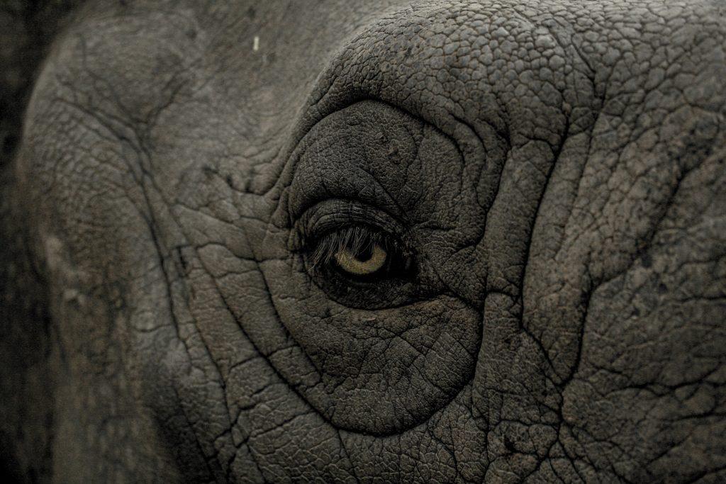 Honey Badgers are Dangerous (Rhino's Eye)